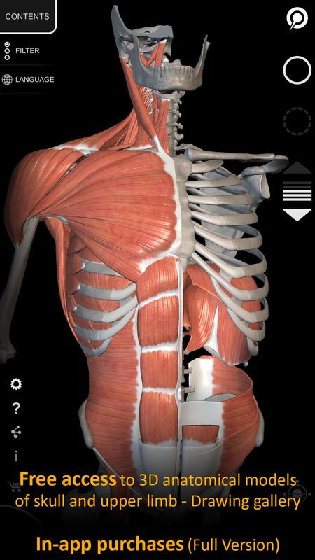 Muscle | Skeleton - 3D Atlas of Anatomy APK Download - Free Medical ...