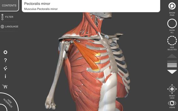 Muscle | Skeleton - 3D Atlas of Anatomy screenshot 10