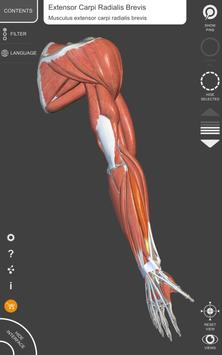 Muscle | Skeleton - 3D Atlas of Anatomy screenshot 12