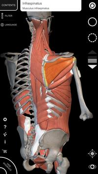 Muscle | Skeleton - 3D Atlas of Anatomy screenshot 1