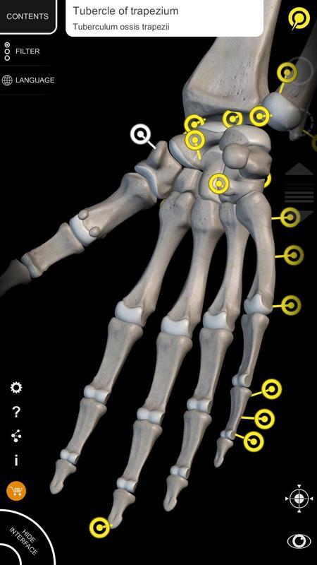 Muskeln | Skelett - 3D Atlas der Anatomie für Android - APK ...