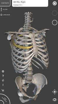 Skeleton | 3D Anatomy gönderen