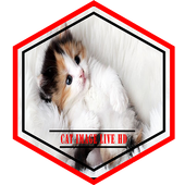 Cat Image Live HD icon