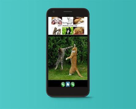 Cat Image Live HD apk screenshot