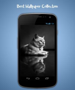 Cat Live Wallpaper screenshot 1