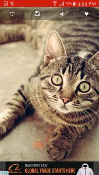 Cat Wallpaper apk screenshot