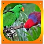 Kicau Burung Betet Vs Nuri icon