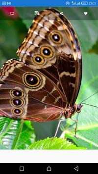 Butterfly Wallpapers HD screenshot 2