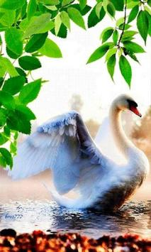 Peaceful Swan Live Wallpaper poster