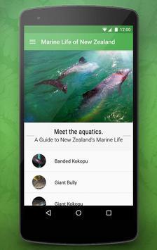 Marine Life of NZ Free poster