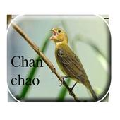 Chanchão de Pássaros icon