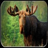 Moose Sounds icon