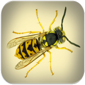 Wasp sounds icon