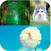 Nature Backgrounds icon