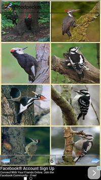 All Birds Wallpapers apk screenshot