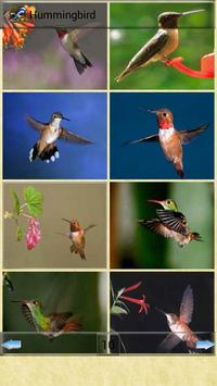 All Birds Wallpapers screenshot 3