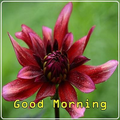 Good Morning Flowers for Android - APK Download