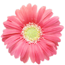 PG Flowers - Flower Sticker Pack from Photo Grid APK