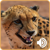 Cheetah Ringtones icon