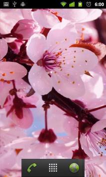 cherry blossom live wallapper apk screenshot