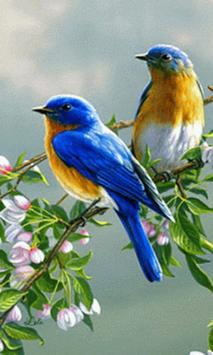 Animated Birds GIF apk screenshot