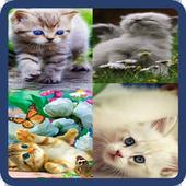 Animated Cat GIF icon