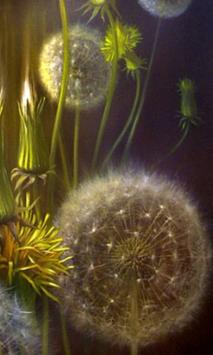 Animated Dandelion poster