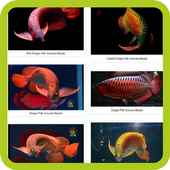Dragon Fish Arowana Beauty icon