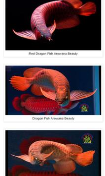 Dragon Fish Arowana Beauty poster