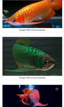 Dragon Fish Arowana Beauty apk screenshot