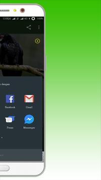Kicau Burung Srigunting screenshot 4