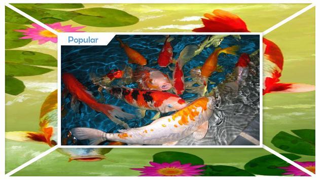 Koi Fish Live Wallpaper screenshot 2