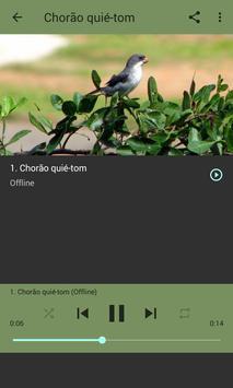 O canto melancólico da Patativa-chorona screenshot 3