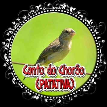 O canto melancólico da Patativa-chorona poster