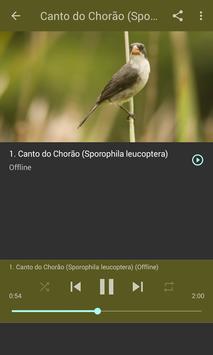 O canto melancólico da Patativa-chorona screenshot 4