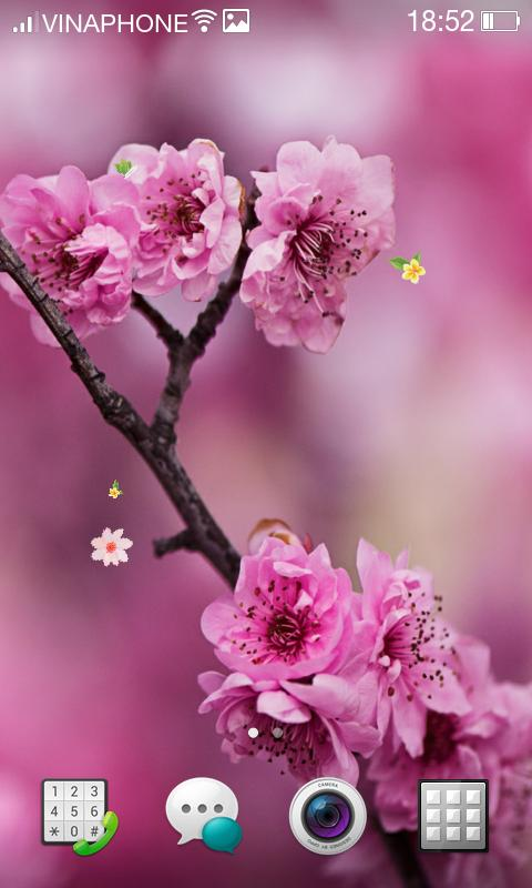 Cherry Blossom Live Wallpaper Hd 4k For Android Apk Download