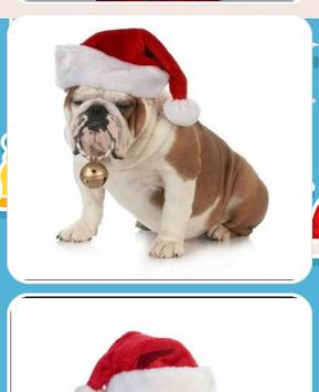 Christmas Dog Pictures screenshot 3