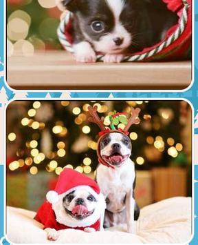 Christmas Dog Pictures screenshot 1