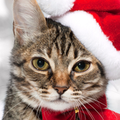 christmas cat wallpapers icon