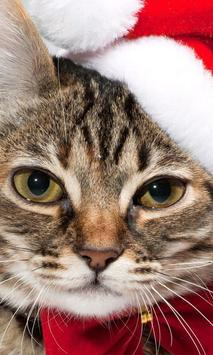 christmas cat wallpapers poster