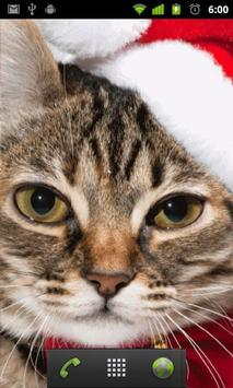christmas cat wallpapers apk screenshot