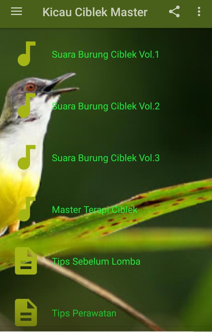 Kicau Ciblek Ngebren For Android Apk Download