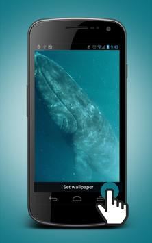 Whale Live Wallpaper poster