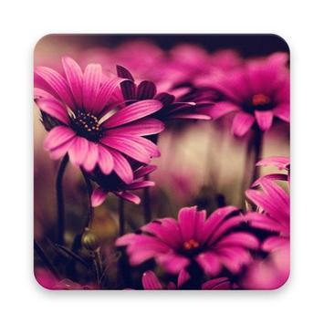 wallpaper flower hd poster
