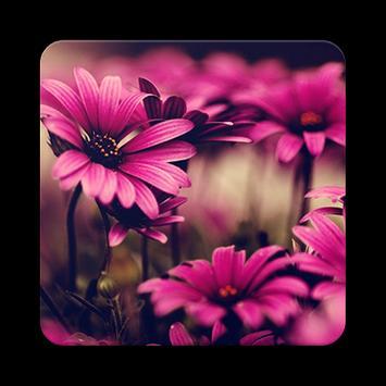 wallpaper flower hd screenshot 10