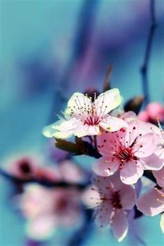 wallpaper flower hd screenshot 1