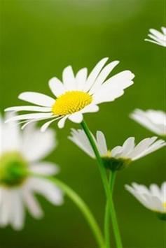 wallpaper flower hd screenshot 7