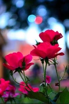 wallpaper flower hd screenshot 5