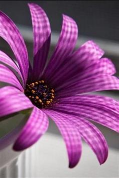 wallpaper flower hd screenshot 6