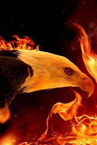 Bald Eagle Wallpaper For Android Apk Download